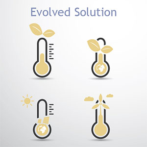 Evolved Solution